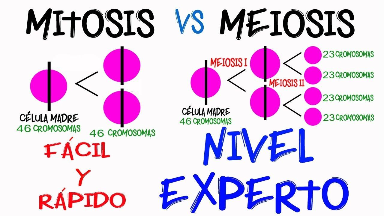 Diferencia Mitosis y Meiosis NIVEL EXPERTO en 2 minutos [Fácil y Rápido] | BIOLOGÍA |