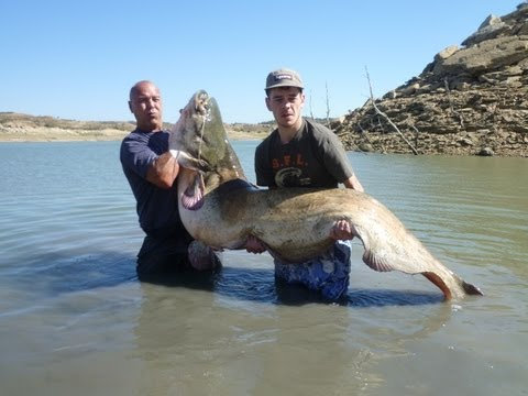 Fishing For Giant Catfish At The Ebro Part 1