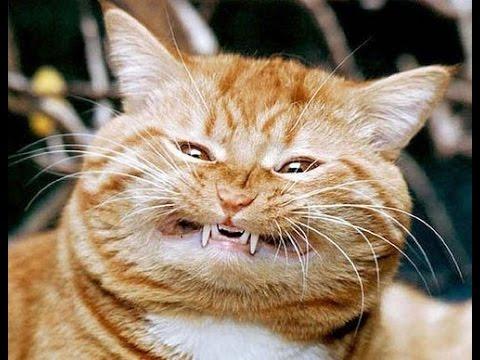 Вопрос: Как подобрать себе подходящего котенка?