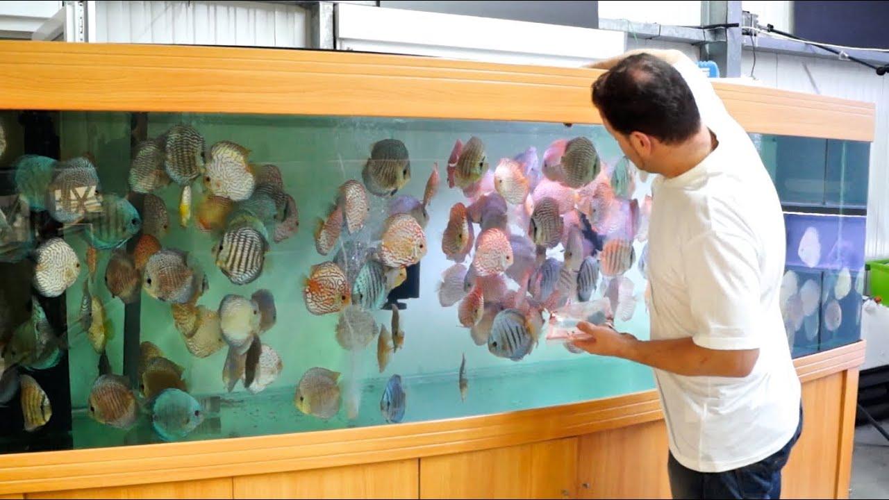 3000 liter diskus aquarium 800 gallon discus tank youtube. Black Bedroom Furniture Sets. Home Design Ideas