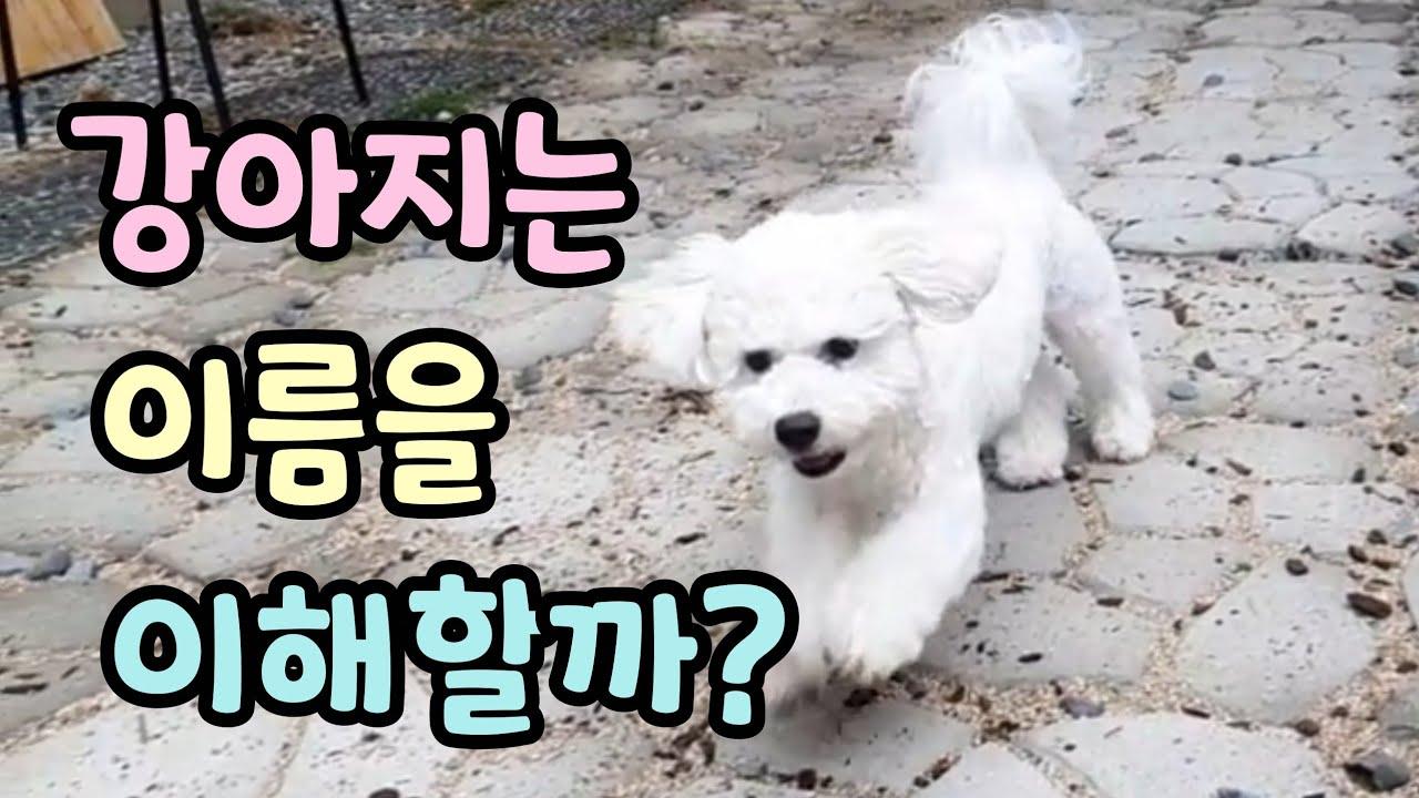 강아지는 이름을 진짜 알아듣는걸까?