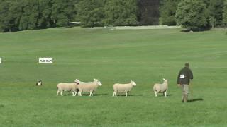 3rd Day Welsh Nationals Sheepdog Trials 2018 - AM