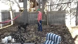 How To Train Your Dog - Dog Impulse Contorl - Dog Obedience  - Drop It And Leave It (mv) - Part 3