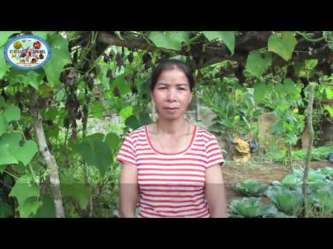 Interview of farmers at Dakcheung district on thier success stories -  FNML