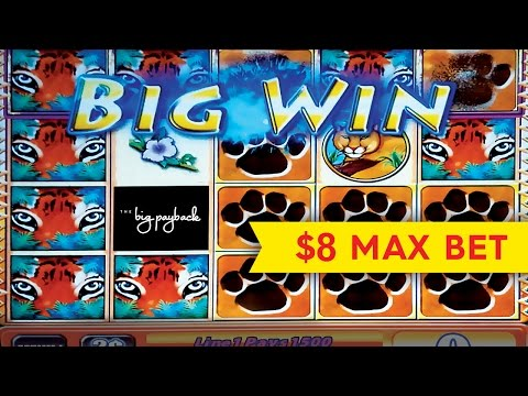 Tiger's Realm Slot - lNCREDIBLE $1000 BIG WIN - $8 Bet! - 동영상