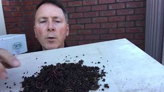 Tricks to growing worms for fishing