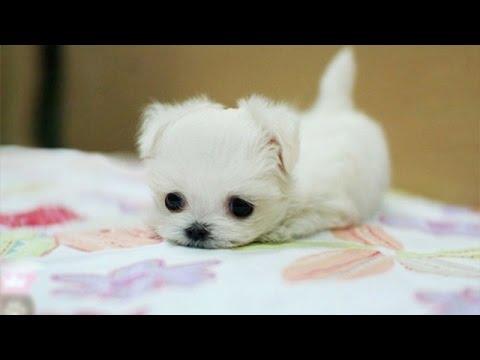 cute puppies cute pets