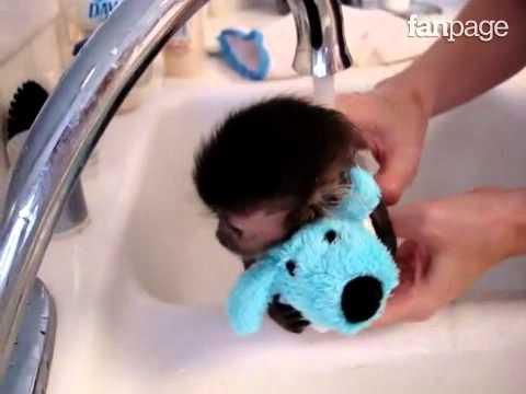 Scimmietta che fa il bagno youtube - Bambolotti che fanno il bagno ...