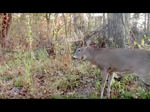 Best Treestand Tips For Safe Deer Hunting Youtube