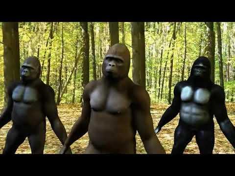 Sambalpuria babu sambalpuri video | gorilla sambalpuri comedy dance | Mantu chhuria|