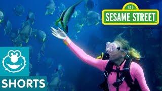 Sesame Street: Underwater Adventures in Australia