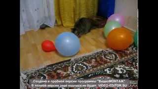 Кошки и шары