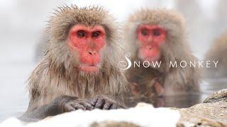【Snow Monkey】soaking in hot spring in winter ,Japan4K |地獄谷野猿公園