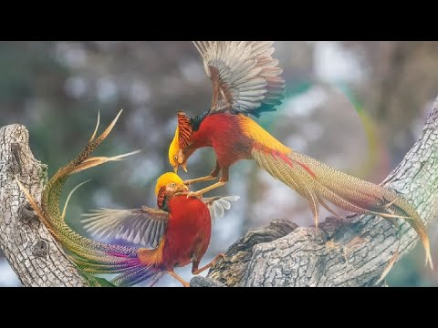 Top 8 Most Beautiful Exotic Birds In The World