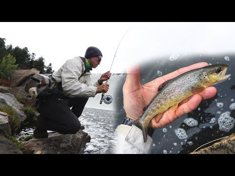 Fly Fishing for Brown Trout at Evergreen Lake COLORADO