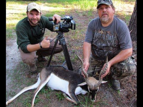 Blackbuck Antelope Hunting In Florida With South Coast Safaris