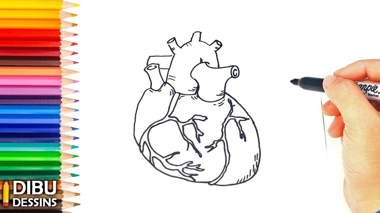 Comment dessiner un Coeur Humain Dessin de Coeur Humain