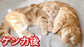 ケンカ後の兄弟猫が可愛すぎて悶絶しました