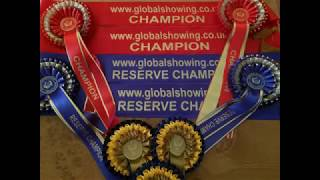 Global Showing - The Online Horse Show