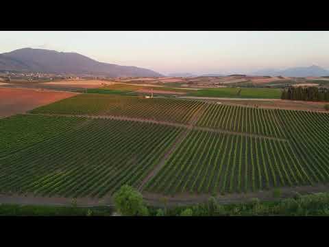 Ιστορική αναδρομή οίνων του Κιθαιρώνα sokos wine