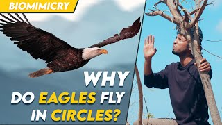 Why do eagles fly in circles? | Biomimicry | Tamil | LMES