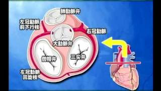 【医療動画 ケアネットDVD】出直し看護塾_心臓の解剖 サンプル動画