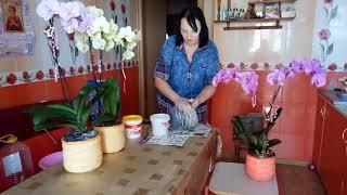 как сделать красивое кашпо для орхидей своими руками! уход за орхидеями!