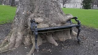The Hungry Tree That Eats Park Benches