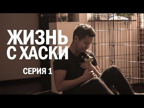 Жизнь с Хаски: Серия 1 (забираю с питомника, первый поход к ветеринару, заселяемся в новую квартиру)