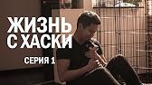 Еду Выбирать Щеночка Хаски HUSKY PUPPY - YouTube