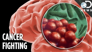 This Genetically Modified Salmonella Destroys Brain Cancer