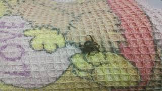 В квартире ползают пауки