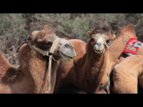 Voyage en Inde avec Shanti Travel - Ladakh, Inde du Nord et Inde du Sudde YouTube · Durée:  1 minutes 54 secondes
