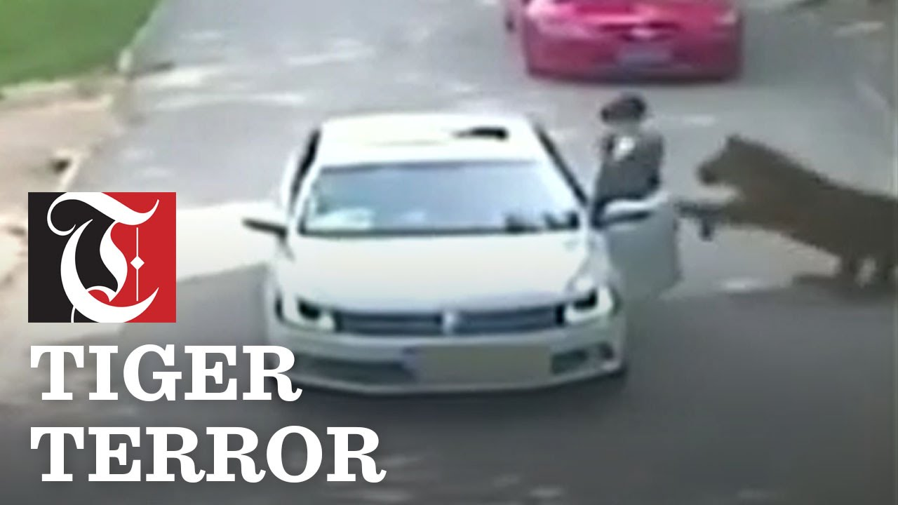 Tiger Attacks Woman in China (WARNING: GRAPHIC VIDEO)