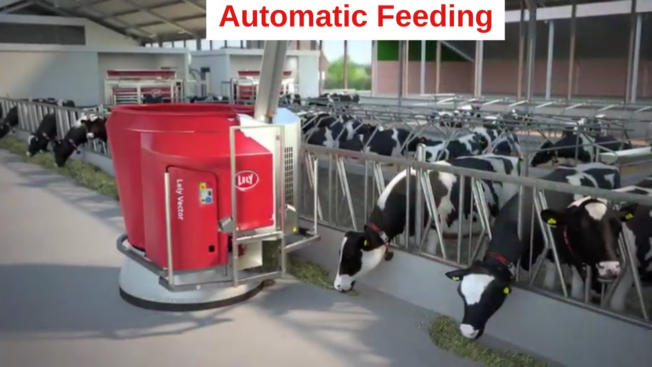 Lely Vector - Improve the feeding kitchen in farming via innovation and technology - Animation (EN)