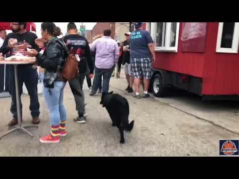 Best dog trainers Milwaukee  heeling with your German Shepherd   GSD dogs