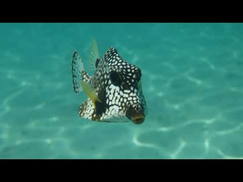 2016 Virgin Islands snorkeling