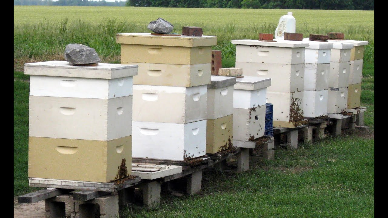 Beekeeping For Beginners Really YouTube - Backyard beekeeping for beginners