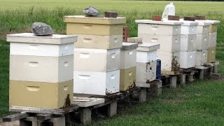 Beekeeping For Beginners - Really -