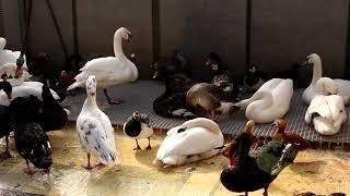 Питомник птиц. Водоплавающие птицы.
