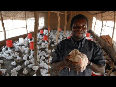 Dokument: Kurčatá pre Afriku - obchod, pri ktorom zastáva rozum SK dab.
