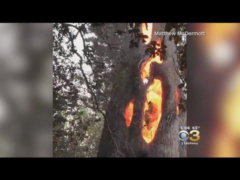 Un árbol ardió solo por dentro y estas fueron las imágenes captadas