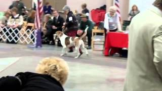 December 15, 2013 - Sunups Hellofapuzzle (English Foxhound) Thank y...