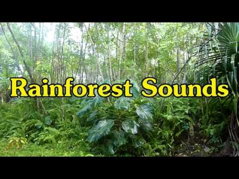 Rainforest Sounds for Relaxation
