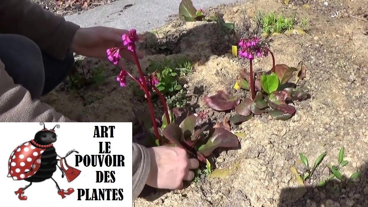 Tuto jardin comment faire la taille et entretien berg nia for Youtube entretien jardin
