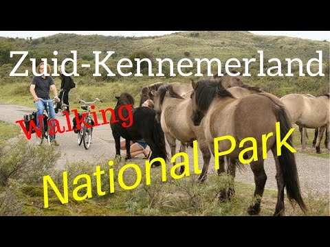 Walking the Dutch Zuid-Kennemerland National Park with (not so) wild horses (4K)