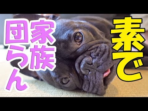 スイートルームで過ごす高貴なココ氏と庶民飼い主 愛犬と箱根旅行7