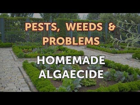 Homemade Algaecide - YouTube