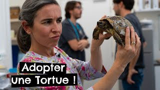 Adopter une Tortue !
