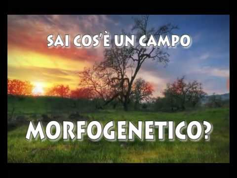 CAMPO MORFOGENETICO LA MASSA CRITICA KRYHOM